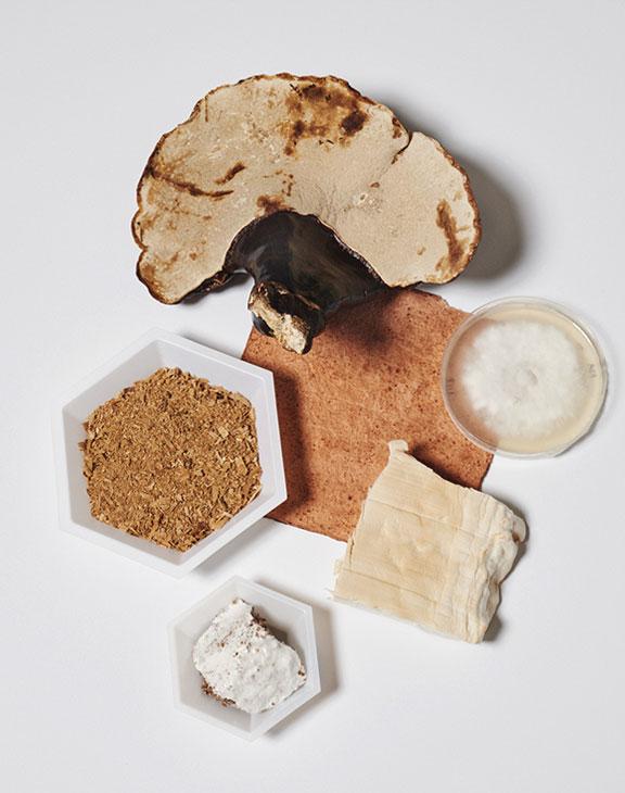 """New materials: Mushroom """"Leather"""""""